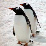 Artículo en «Nature» advierte contra el amarillismo de los medios al presentar casos de conducta homosexual en animales