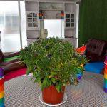 Madrid inaugura, de la mano de Kifkif y con financiación de la Comunidad de Madrid, una residencia para refugiados LGTBI